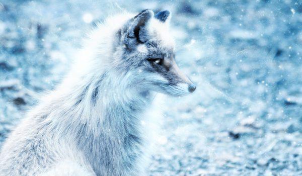 Its a Fox!